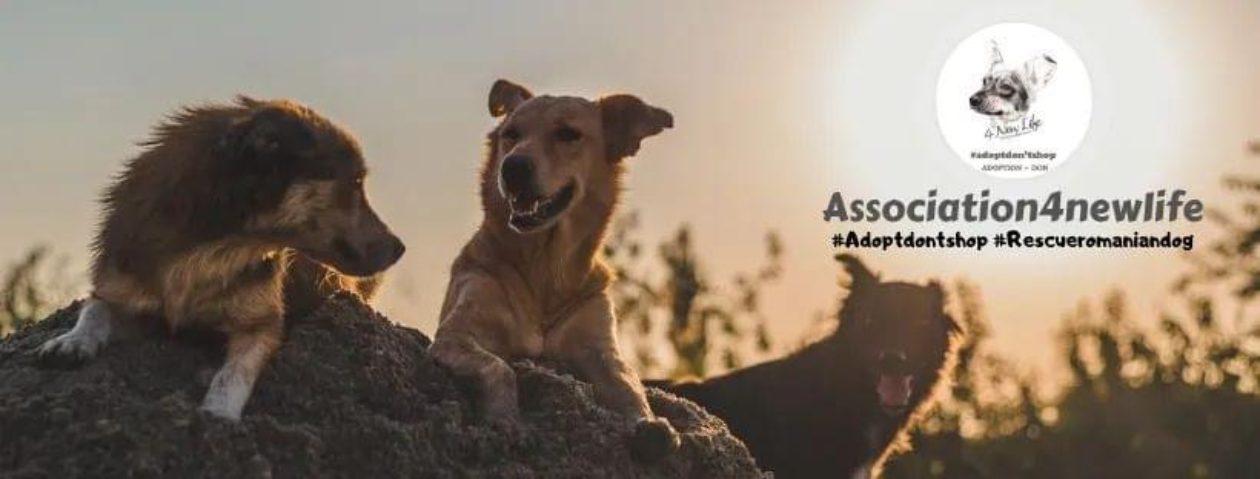 4newlife-Association de Protection et de défense animale. Loi de 1908
